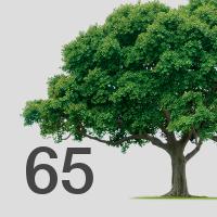 block_65